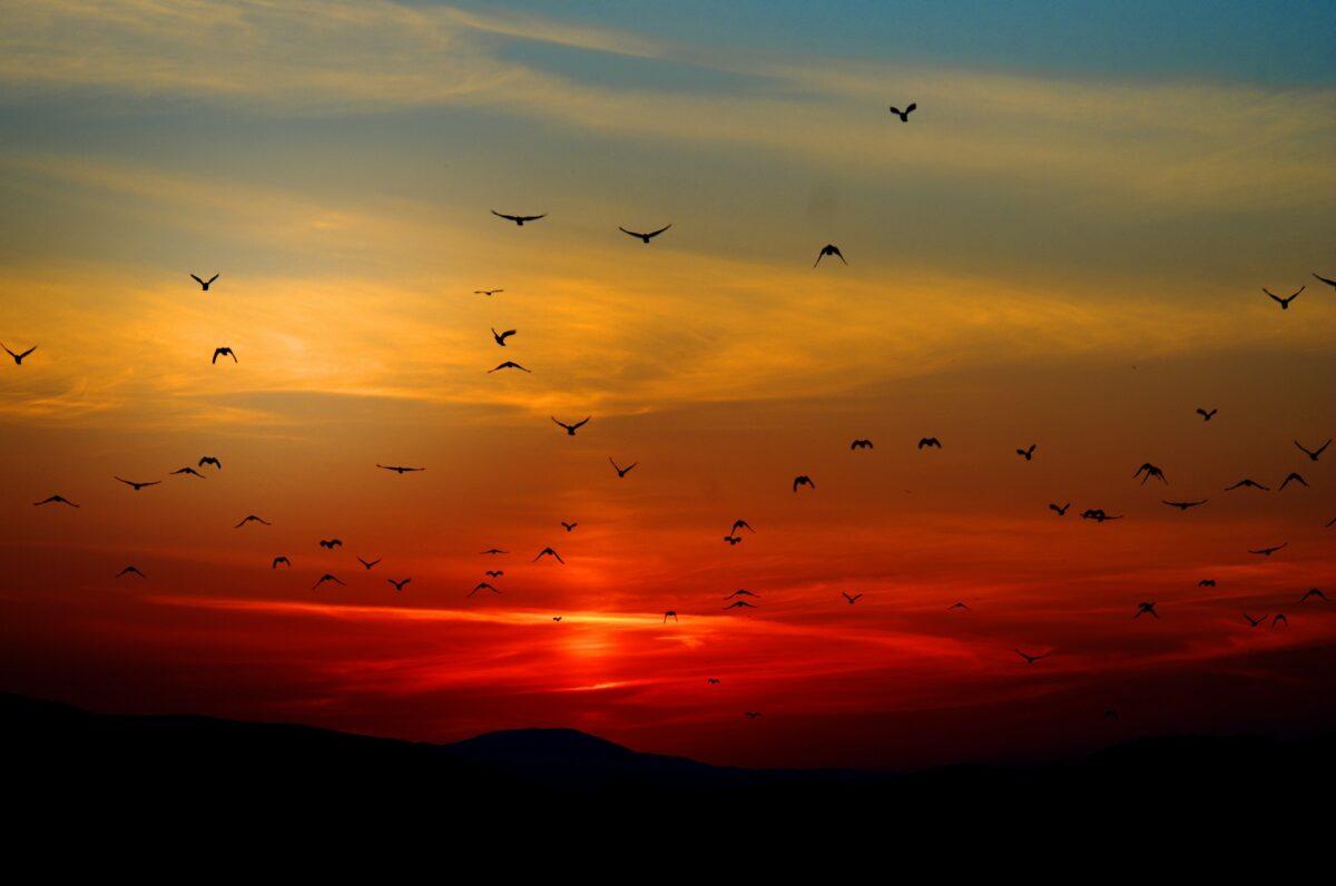 Interpretación de sueños pájaros – ¿Qué significa soñar con un pájaro?