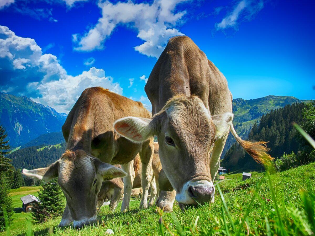 Interpretación de sueños vaca- ¿Qué significa soñar con una vaca?