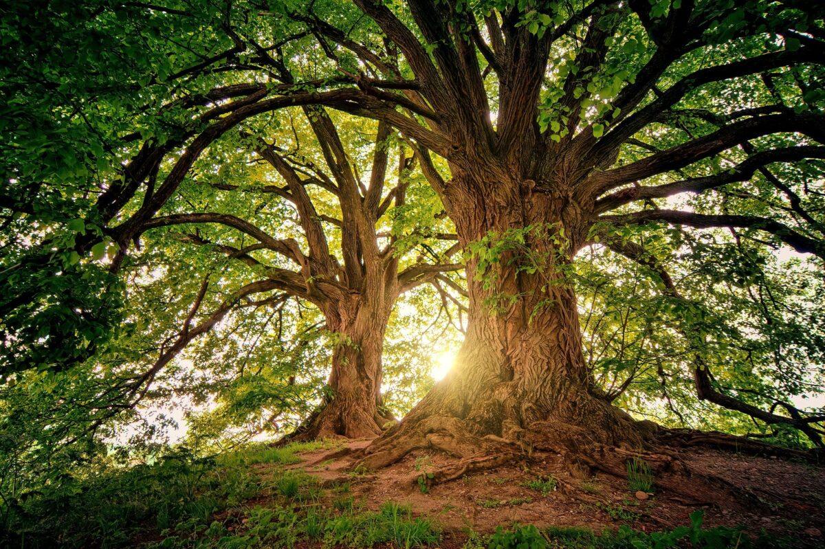 ¿Qué significa soñar con un árbol?