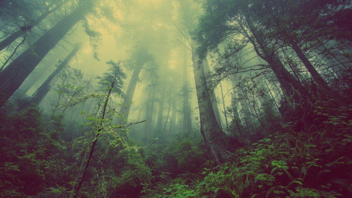 ¿Qué significa soñar con un bosque?
