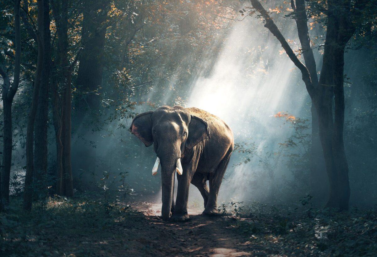 ¿Qué significa soñar con un elefante?