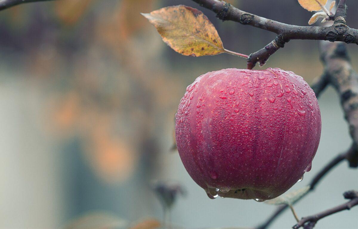 ¿Qué significa soñar con una manzana?