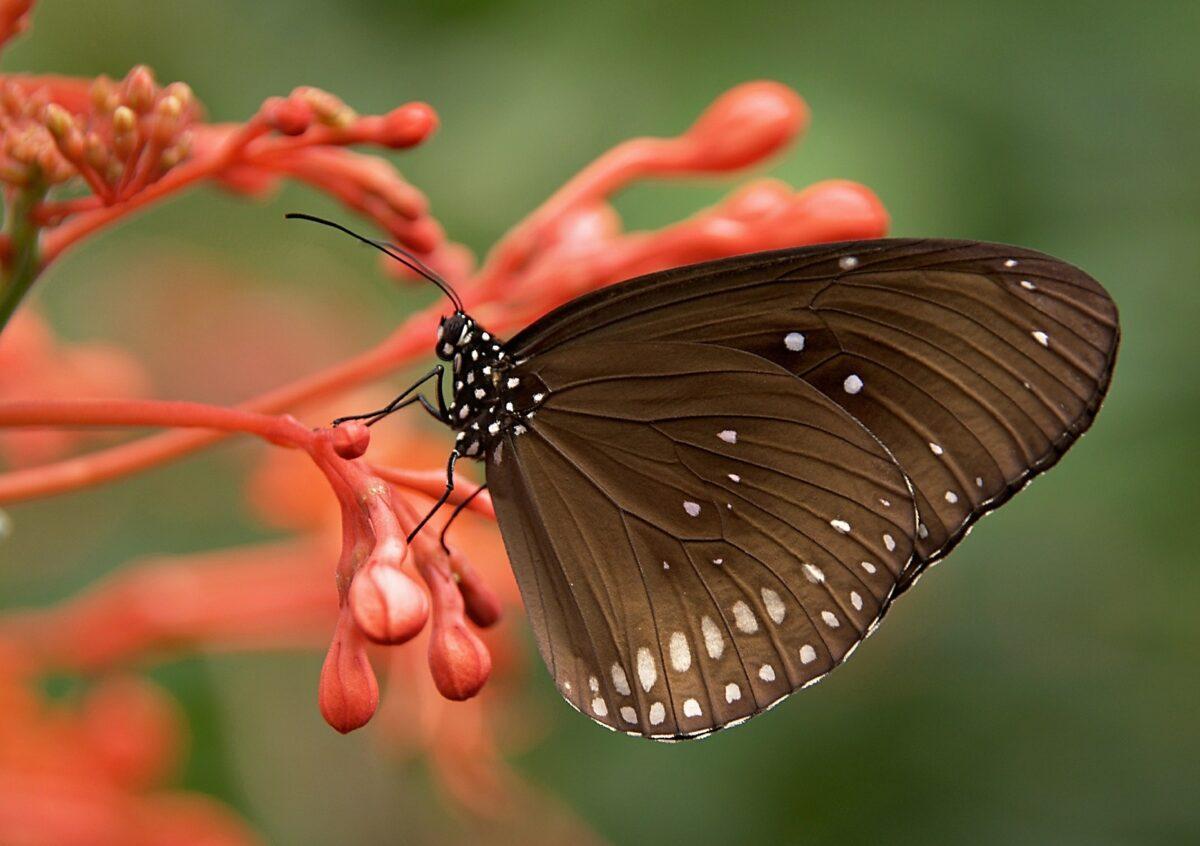 ¿Qué significa soñar con una mariposa?