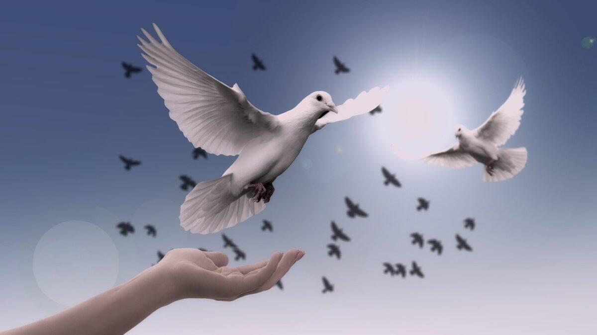 ¿Qué significa soñar con una paloma?