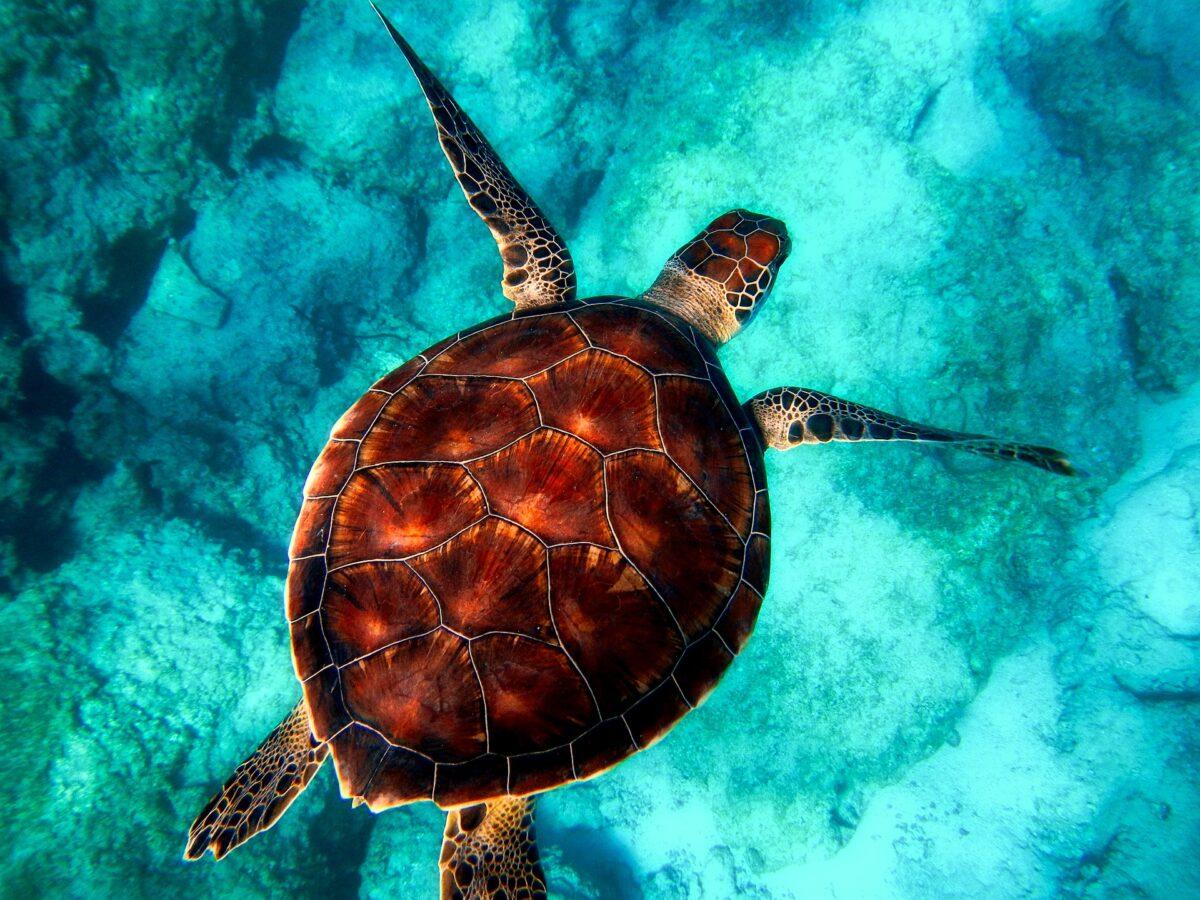 ¿Qué significa soñar con una tortuga?