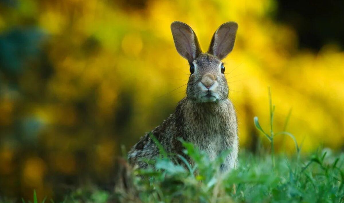 ¿Qué significa soñar con un conejo?