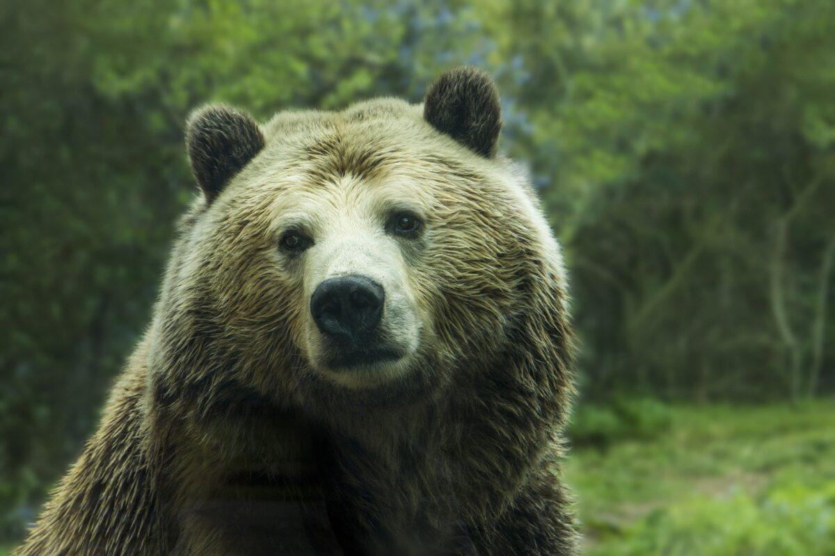 ¿Qué significa soñar con un oso?