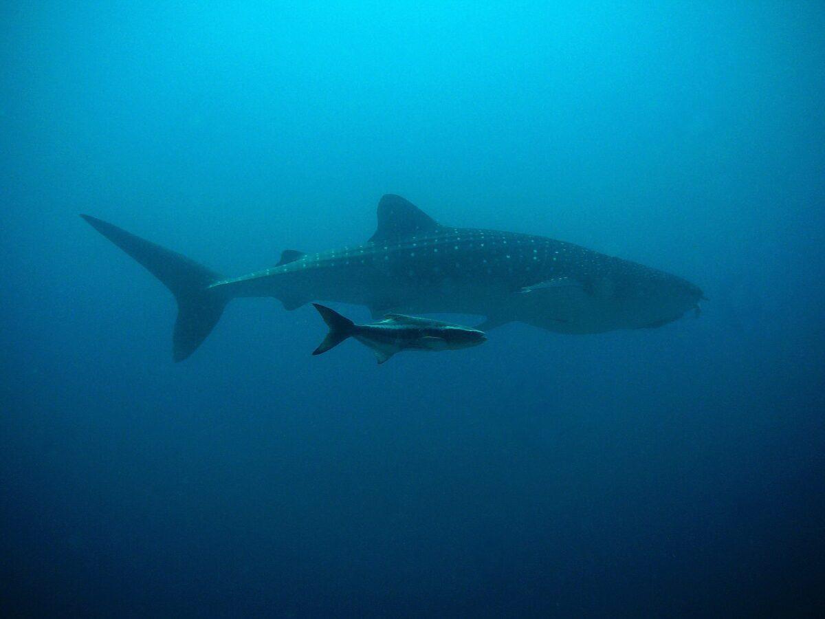¿Qué significa soñar con tiburón?